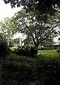 Rajshahi University Shahid Minar 01.jpg