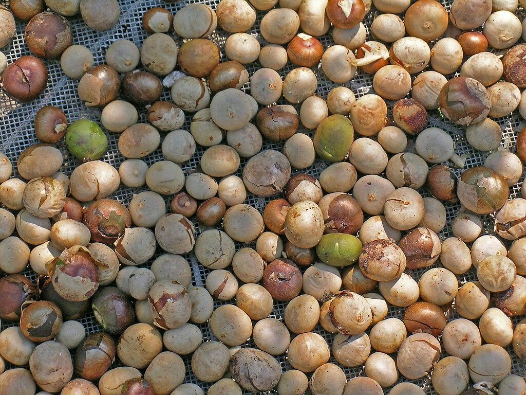 File Ramon Nuts 05 Jpg Wikimedia Commons