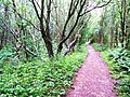 Red path through the green - geograph.org.uk - 923220.jpg