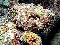 Reef4433 (9718054270).jpg
