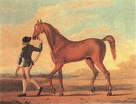 image illustrative de l'article Regulus (cheval)