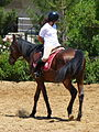 Riding a Horse Backwards 1110829.jpg