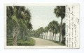 Road To Cocoa, Rockledge, Fla (NYPL b12647398-62383).tiff