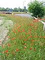 Roadside Verge, Merrow - geograph.org.uk - 460974.jpg