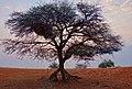 Roots (23857033268).jpg