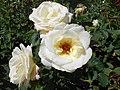 Rosa Chopin 2018-07-16 6267.jpg