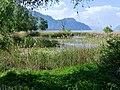 Roselières des Mottets au lac du Bourget (mai 2018).JPG