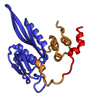 Eukaryotic small ribosomal subunit (40S) - Image: Rp S2
