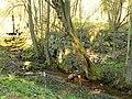 Ruiny młynu wodnego na trasie Smolnica Warnice - panoramio.jpg
