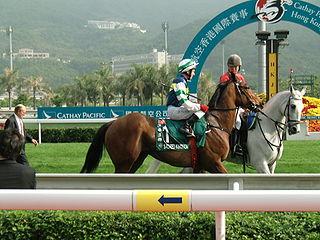 Encosta De Lago Australian Thoroughbred racehorse