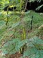 San Juan Botanical Garden - DSC07066.JPG
