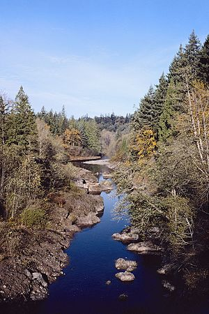 Sandy River (Oregon) - Trees and shrubs in various shades surround the calm waters of the Sandy River.