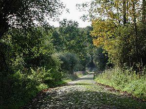 John II, Margrave of Brandenburg-Stendal -  400-year-old road in the Schorfheide hunting grounds