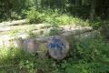 Schotten Betzenrod Logging Fraxinus excelsior DSHWood.png