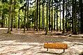 Scoutcentrum Buitenzorg Baarn - panoramio (4).jpg