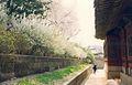Seoul - panoramio - sasikan (5).jpg