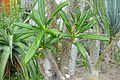 Serre des milieux arides-Jardin des plantes de Nantes (10).jpg