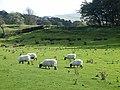 Sheep below Walltown Crags - geograph.org.uk - 1540599.jpg