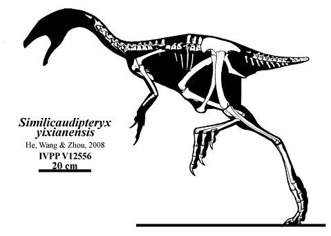 Similicaudipteryx