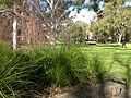 Simpson lawn-1.jpg