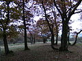 Site ancien cimetière mérovingien à Hamoir.JPG
