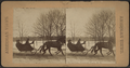 Sleighing, Central Park, N.Y, from Robert N. Dennis collection of stereoscopic views.png