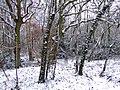 Snow at Town End Plantation - geograph.org.uk - 722788.jpg