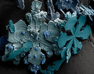 Ice crystals - Dendritic ice crystals imaged with a scanning electron microscope. The colors are computer generated.