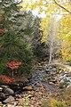 Snows Brook, Nr Village Rd, Waterville Valley (494173) (11917880966).jpg