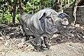 Some pig (4032830887).jpg