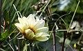 Sommerblüte (44337596).jpeg