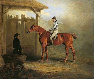 Soothsayer (horse) British-bred Thoroughbred racehorse