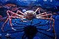 Spider Crab (19066404505).jpg