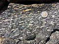 Spitzer Granodioritgneis sl6.jpg