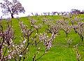 Spring has Sprung - Flickr - jurvetson.jpg