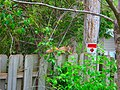 Squirrel in the Back Yard - panoramio.jpg