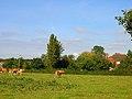 St Helena Farm - geograph.org.uk - 57138.jpg