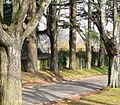 Stand of trees, Oldway mansion, Paignton - geograph.org.uk - 700453.jpg