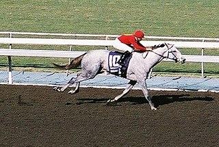 Stardom Bound American-bred Thoroughbred racehorse