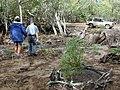 Starr-020118-0023-Myoporum sandwicense-planting with Kim and Fern-Kanaha pond-Maui (24250387250).jpg