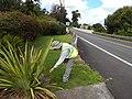 Starr-140624-0753-Phormium tenax-habit with Kim doing ant surveys State roads-Kekaulike Ave Kula-Maui (25217128036).jpg