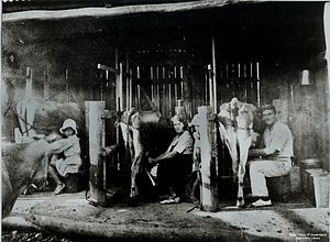 South East Queensland - Milking cows at Mount Maroon, 1935