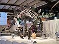 Stegosaure IRSNB.JPG