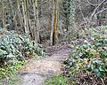Steps to the River - geograph.org.uk - 1615680.jpg