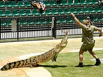 Steve Irwin - Irwin feeding a crocodile at Australia Zoo