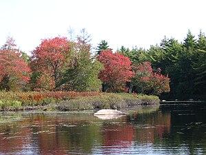 Kejimkujik National Park - Still Brook
