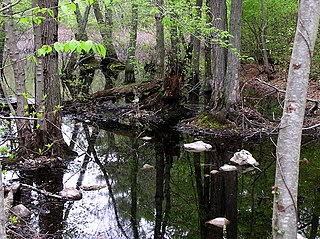 Stony Brook Reservation