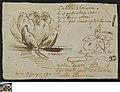 Studies van een waterlelie, 1759-06-07, Groeningemuseum, 0041424000.jpg