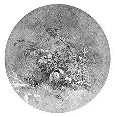 Study of Ground Foliage (from Cropsey Album)
