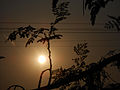 Sun peeking through branches.JPG